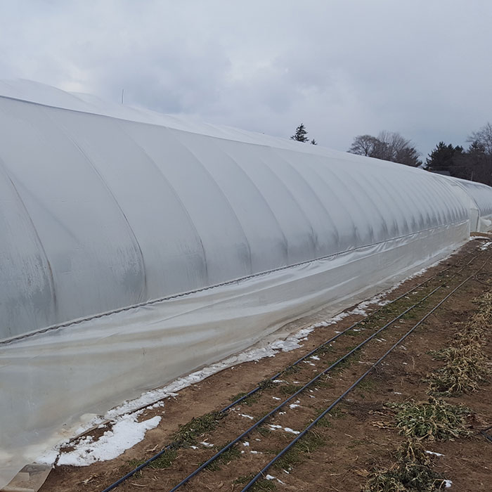 Cold tunnels greenhouses
